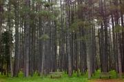 Δάσος Βυτίνας