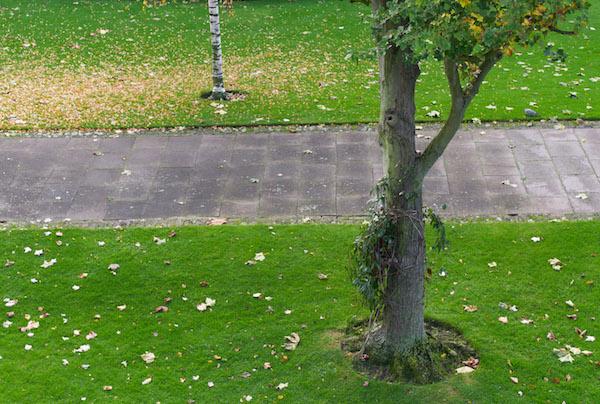 Λονδρέζικα φθινοπωρινά χρώματα...